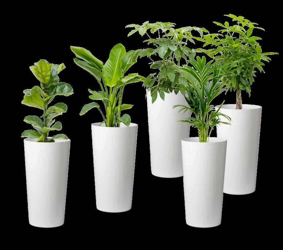 5 bacs et plantes tribu verte