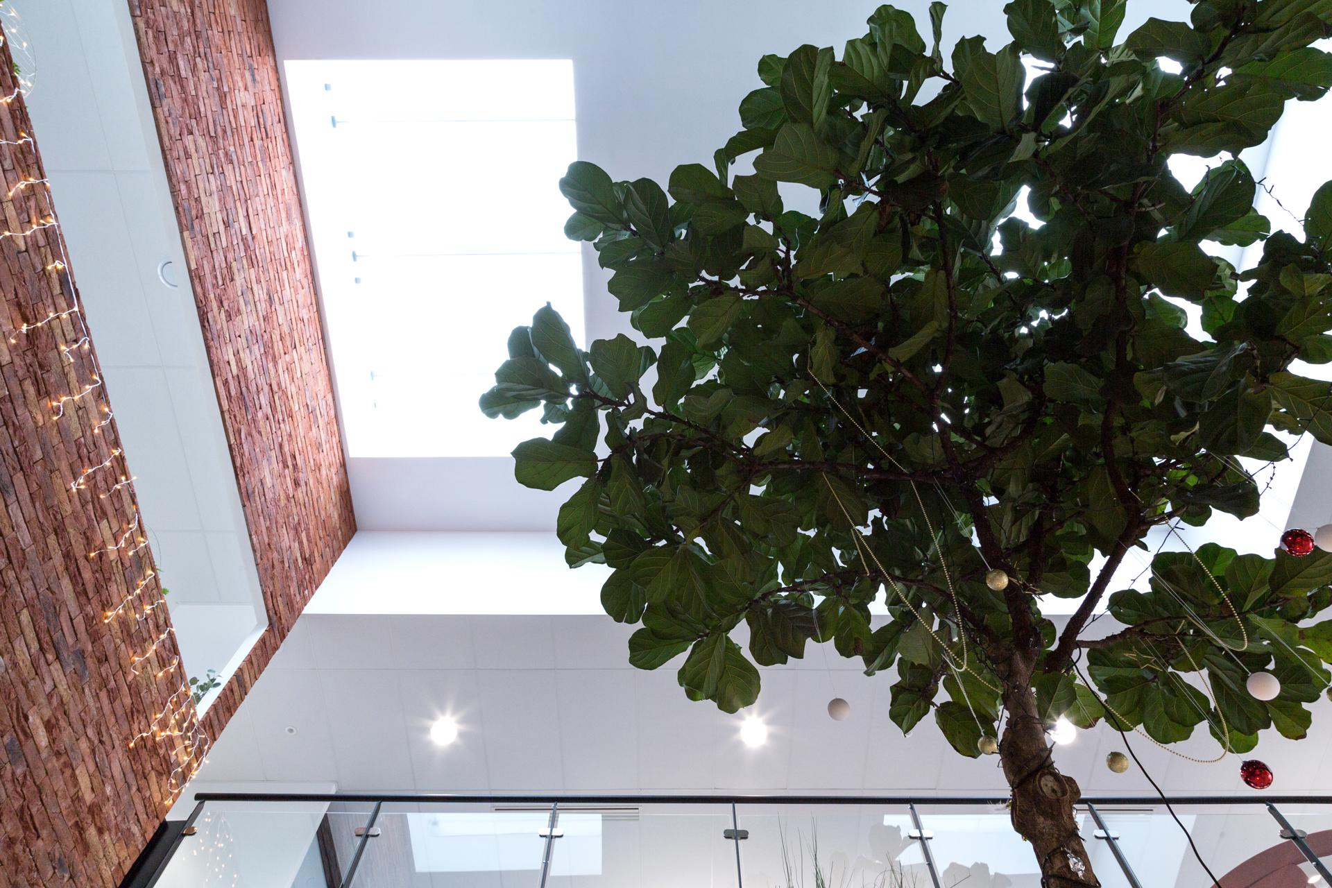 Yanomami-Apsi-table-connectee-vegetale-dessus-lyrata-plongee-verriere